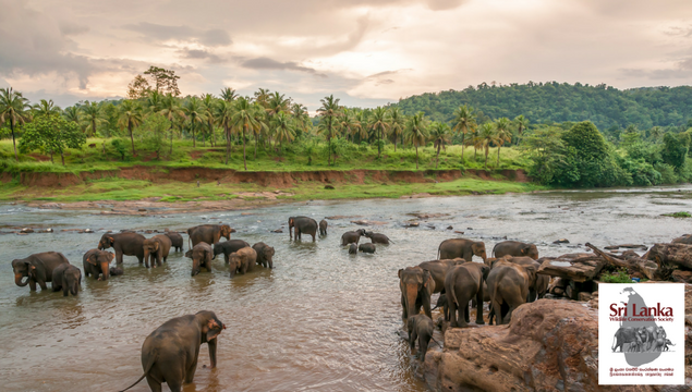EXPLORE SRI LANKA ON A NATURE & WILDLIFE EXPLORATION