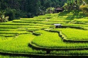 Yoga and womens education Bali
