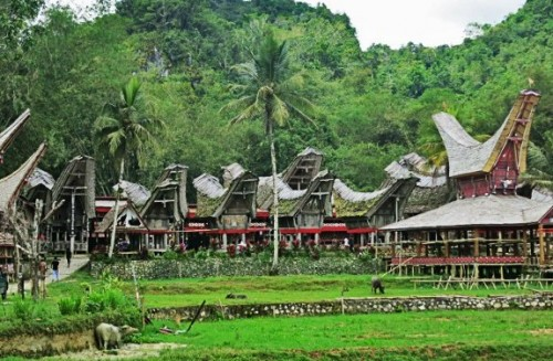 EXPERIENCE THE UNIQUE CULTURE AND COFFEE COMMUNITIES OF SULAWESI