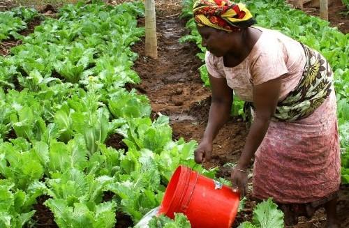 Organic gardening, sustainable living