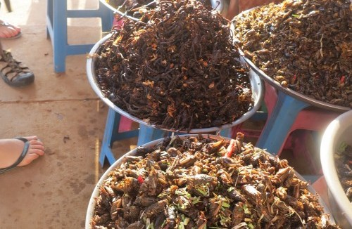 EATING INSECTS FOR SUSTAINABILITY