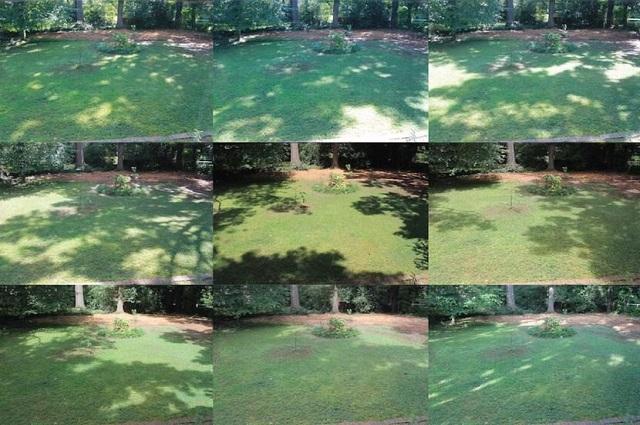 Ideal lawn for an organic garden