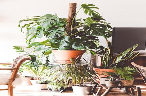 How to embrace nature in your home