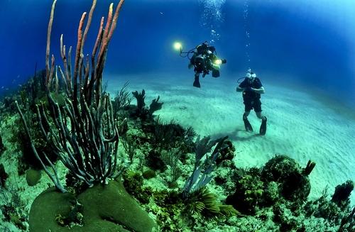Ocean Underwater Reef Diving Sea Divers Scuba