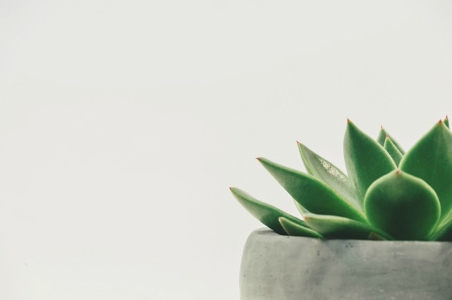 Green Living - Plant